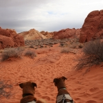 Valley of Fire is a state park, so dogs are allowed most places.